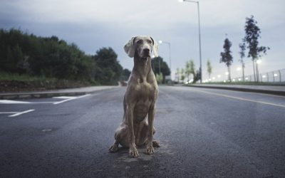 Stopping for Animals on Roads and Freeways is Dangerous for All Concerned