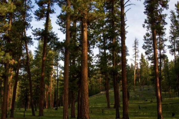 Healthy Forest Initiative to Reduce Wildfire Risk Expands in Arizona